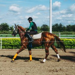 Everything you need to know about tendon boots for your horse