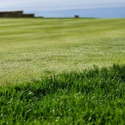Top factors to consider before an artificial turf job